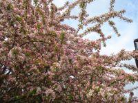 17_Blütenpracht